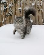 9th Feb 2021 - Snow, snow, snow ❄️