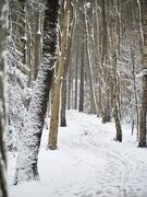 9th Feb 2021 - Snowy path