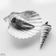 9th Feb 2021 - Shells