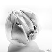 10th Feb 2021 - garlic