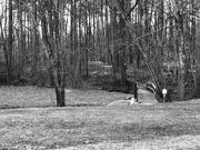 6th Feb 2021 - Park landscape