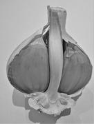 9th Feb 2021 - Inside the garlic