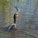 My catch of the day.  by dutchothotmailcom