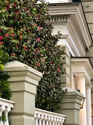 10th Feb 2021 - Camellias and architecture in the historic district, Charleston