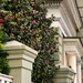 Camellias and architecture in the historic district, Charleston