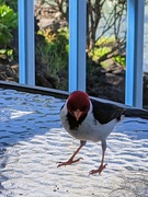 6th Feb 2021 - Bird friend
