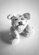 10th Feb 2021 - Silky Bear