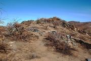 11th Feb 2021 - hillside