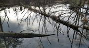 4th Feb 2021 - Levitating Tree.