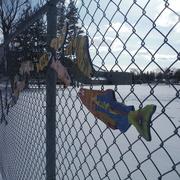 10th Feb 2021 - Fences #6: Fish on a Fence