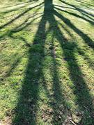 10th Feb 2021 - A tree's shadow