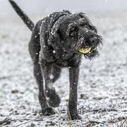 11th Feb 2021 - Fun Time in the Snow!