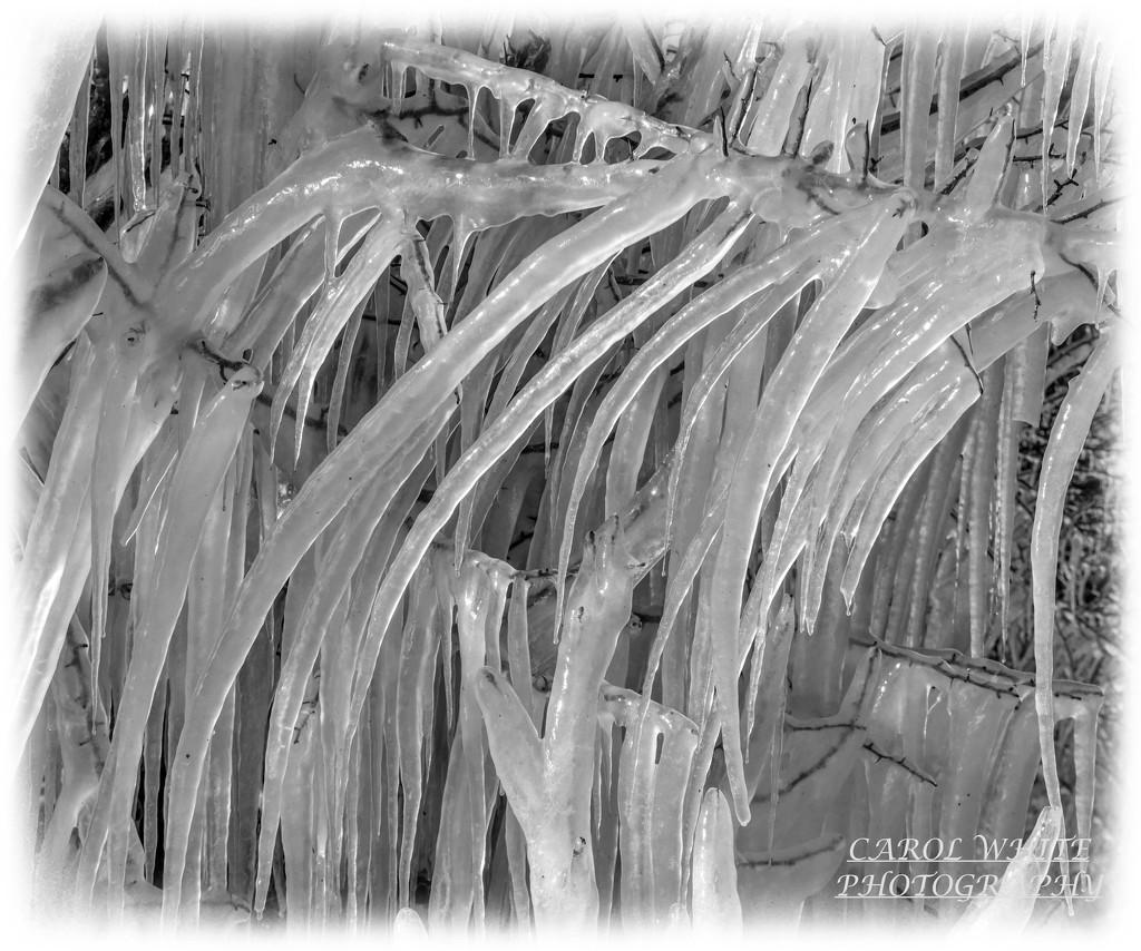 ICE,ICE!! by carolmw