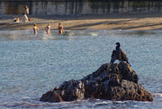 11th Feb 2021 - Birdwatching at Collioure