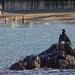 Birdwatching at Collioure
