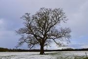 11th Feb 2021 - It's that tree again!