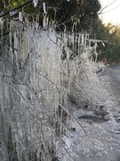 11th Feb 2021 - Icicles!