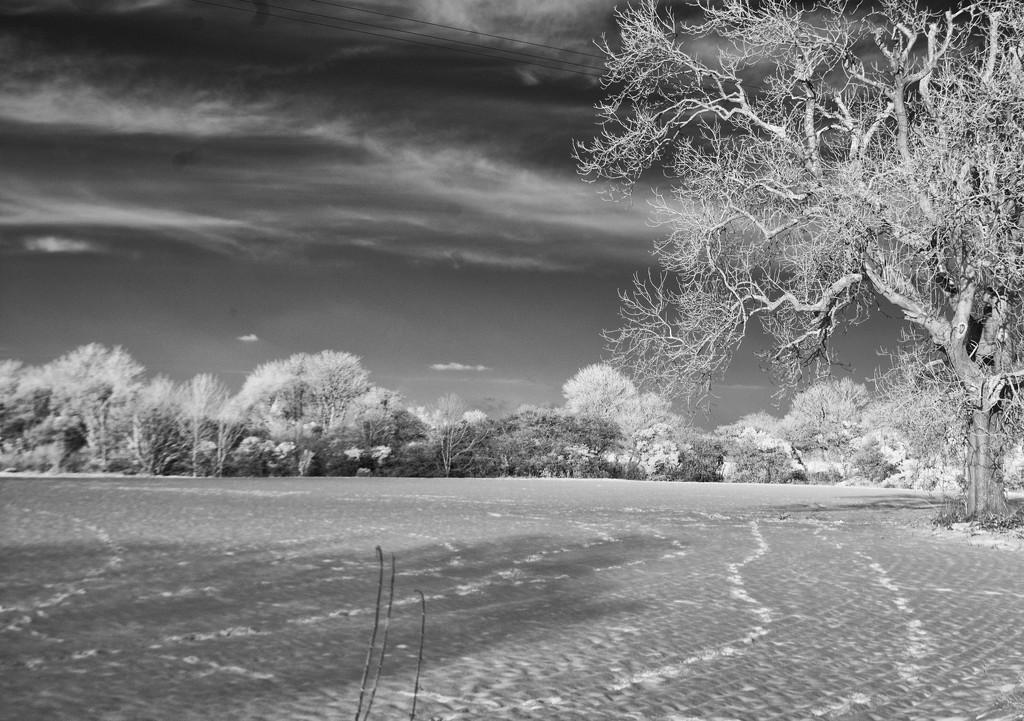 Fresh Footprints by fbailey