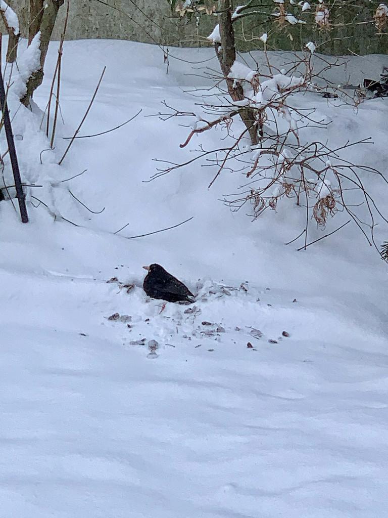 Digging the snow.  by cocobella