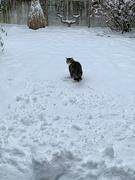 13th Feb 2021 - Zébulon loves snow.