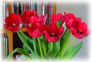 12th Feb 2021 - red tulips