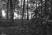 11th Feb 2021 - Woods in black and white
