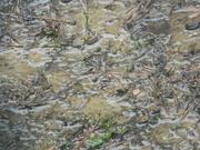 11th Feb 2021 - Muddy Backyard