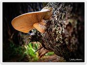 12th Feb 2021 - Forest Fungi..