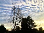 11th Feb 2021 - Sunset from my garden..
