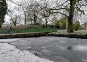 11th Feb 2021 - Frozen moat and coot