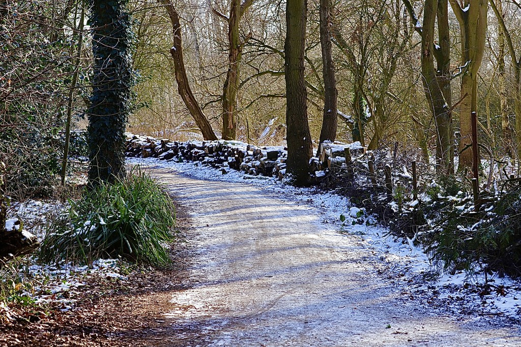 Snowy Path by carole_sandford