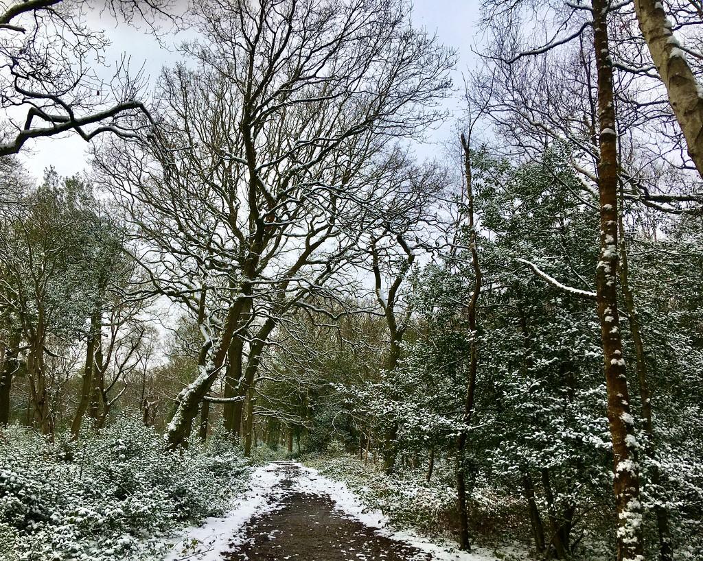 Winter Walk in Sutton Park by moominmomma