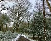 9th Feb 2021 - Winter Walk in Sutton Park