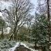 Winter Walk in Sutton Park
