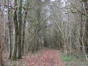 10th Feb 2021 - Woodland path