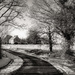 A bend in the road... by vignouse
