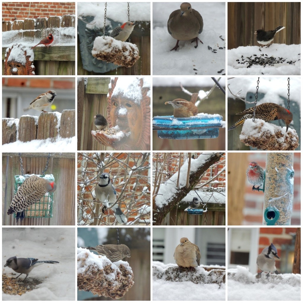 The Backyard Bird Count by allie912