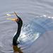 Flip and catch  by dutchothotmailcom