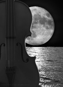 12th Feb 2021 - moonlight sonata