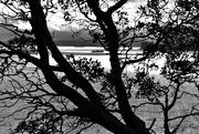 12th Feb 2021 - Ferry through tree