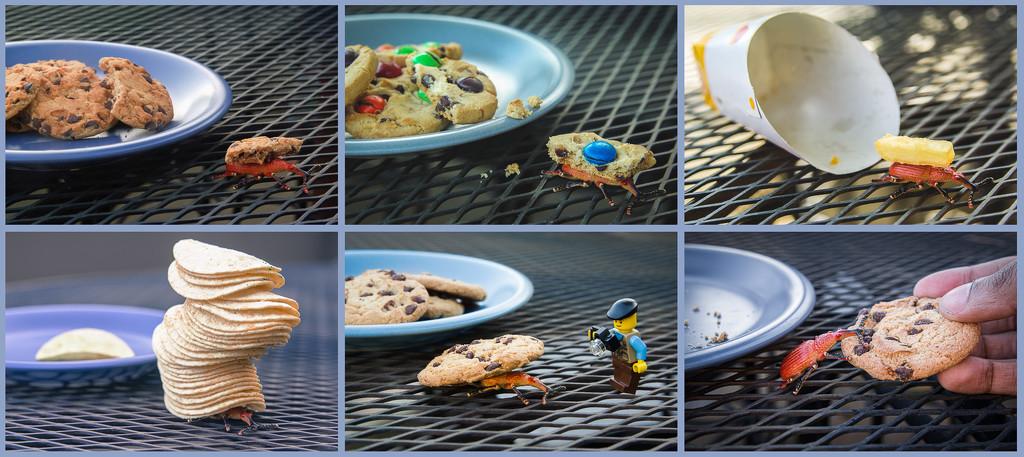 (Day 365) - Snack Snatcher by cjphoto