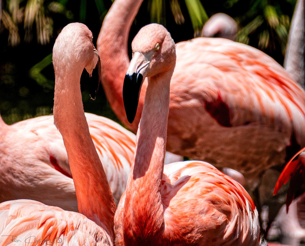 Flamingo Friday '21 02 by stray_shooter