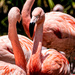 Flamingo Friday '21 02