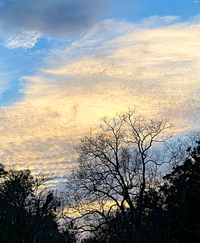 Winter tree and soft sunset clouds by congaree