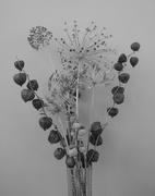13th Feb 2021 - Seedheads