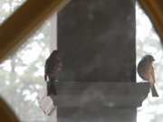 13th Feb 2021 - Two Finches Through Porch Window