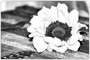 13th Feb 2021 - Happy sunflower