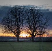 12th Feb 2021 - tree sunset tree