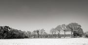 13th Feb 2021 - Field Border... in the snow