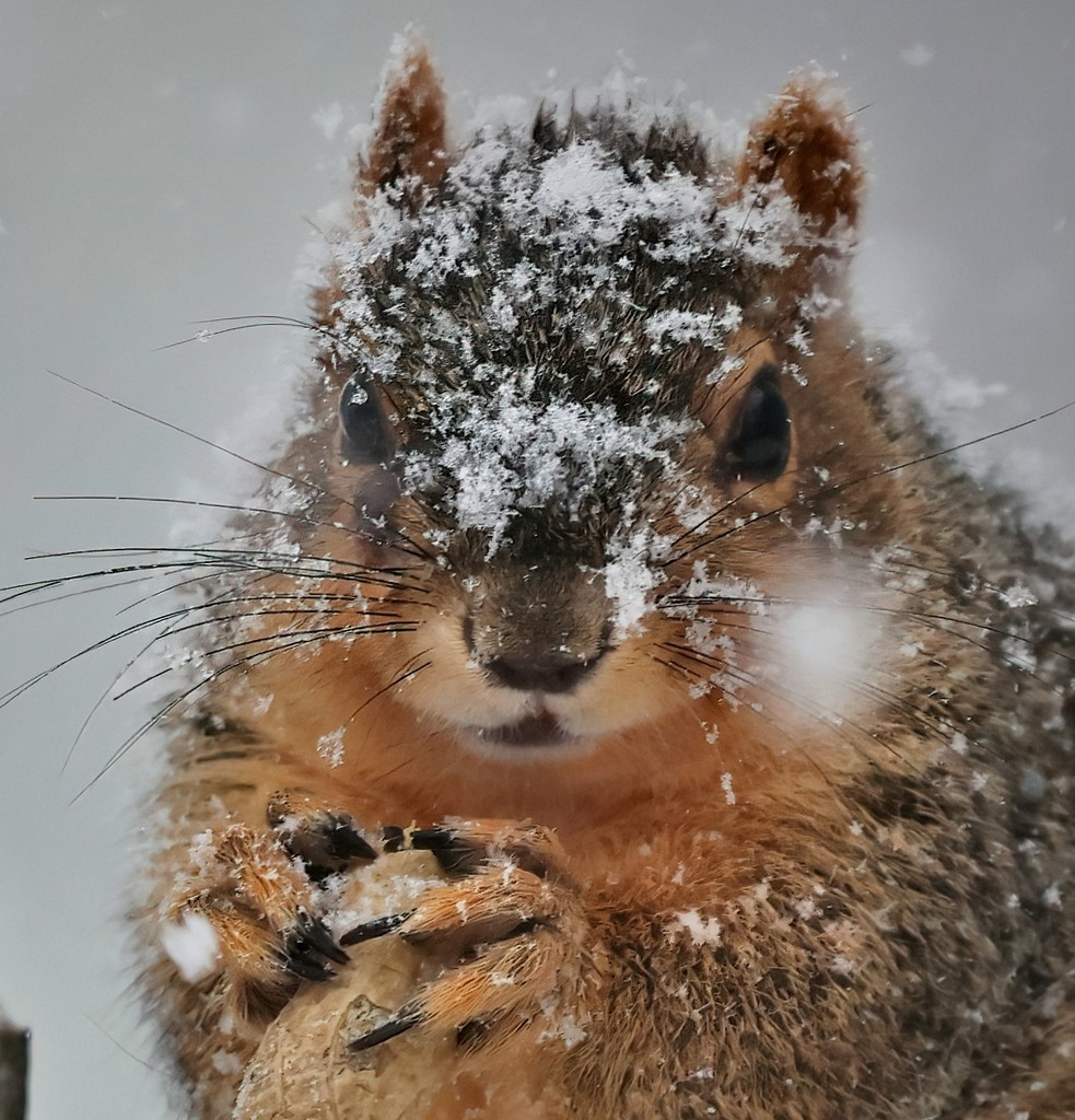 Peanut Snack During Snowstorm by lynnz